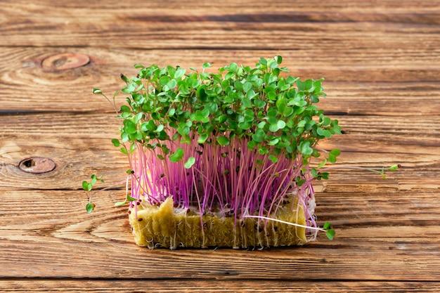 Frische microgreens. sprossen von kohlrabi auf hölzernem hintergrund.