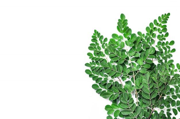 Frische moringa-blätter auf weißem hintergrund