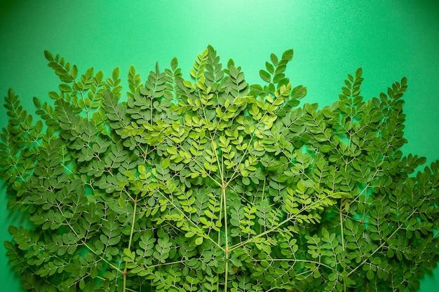 Frische moringa-grünblätter auf grünem balckground