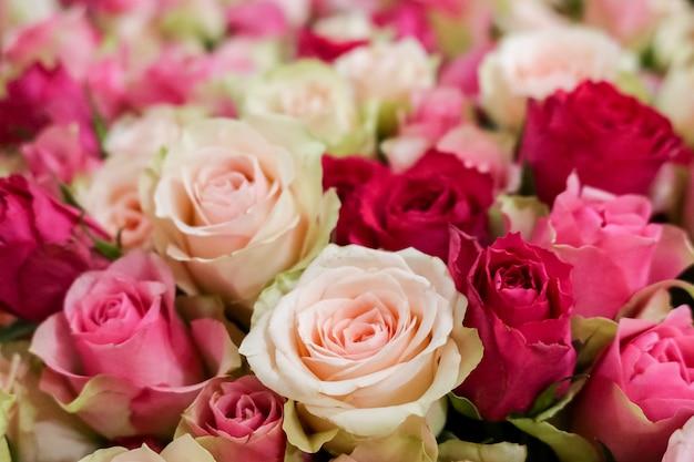 Frische natürliche rosen in den hellen weichen pastellfarben, selektiver fokus.
