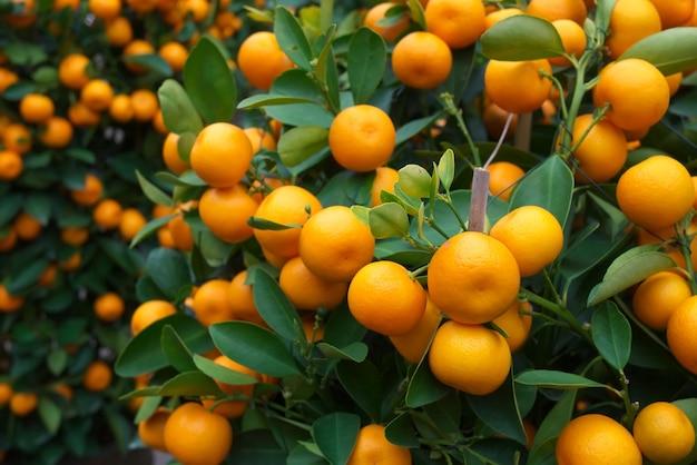 Frische orange auf pflanze