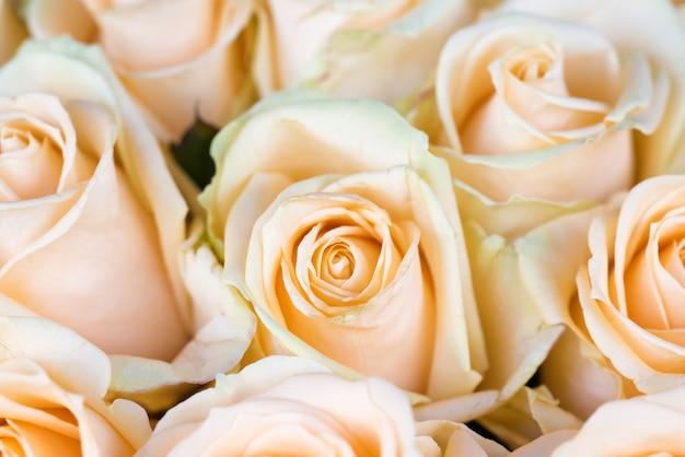 Frische orange rosen mit grünem blatt-naturfrühlingshintergrund. weichzeichner und bokeh
