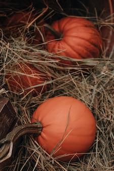 Frische orangefarbene kürbisse im heu auf dem bauernmarkt