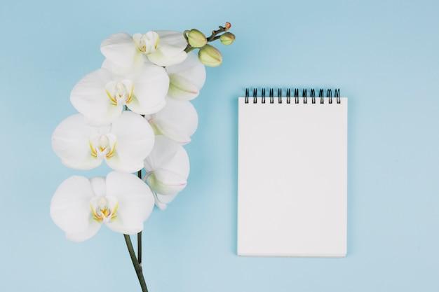 Frische orchideenblume nahe dem gewundenen notizblock gegen blauen hintergrund