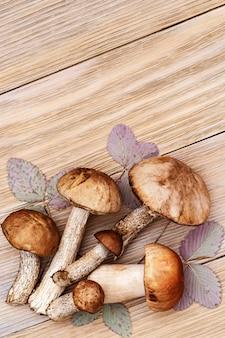 Frische pilze der nahaufnahme wald, rot-mit einer kappe bedeckter krustenstiel, birkenröhrling.