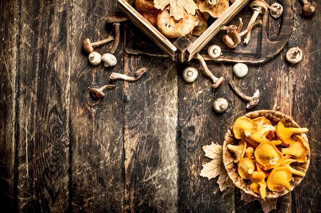 Frische pilze, honigagar und pfifferlinge
