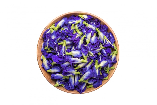 Frische purpurrote schmetterlingserbsenblume