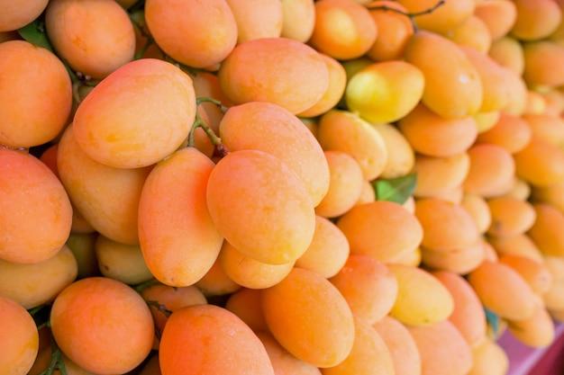 Frische reife marian plum, mayongchid, maprang, plum mango, tropische thailändische frucht