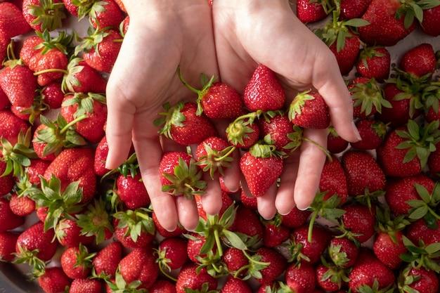 Frische reife organische erdbeeren nahaufnahme. frau, die erdbeere in ihren händen hält. flach liegen