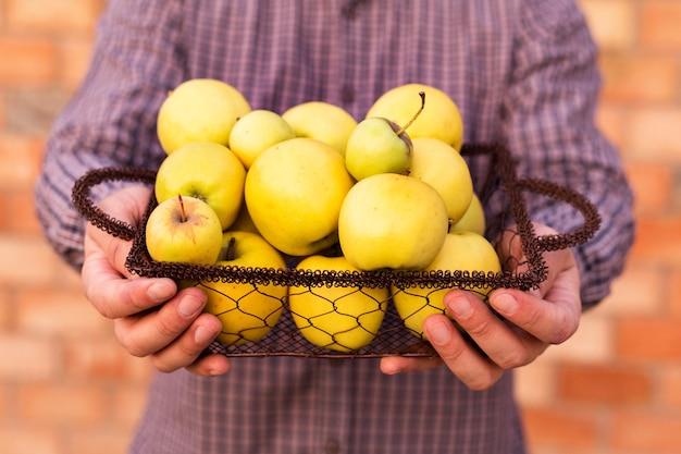 Frische reife organische goldgelbe äpfel in einem holzkorb in männlichen händen.