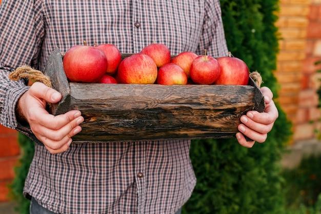 Frische reife organische rote äpfel in der holzkiste in den männlichen händen. herbsternte von roten äpfeln für lebensmittel