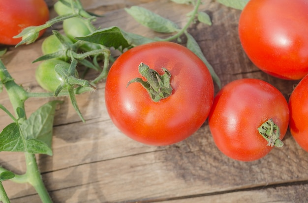 Frische, reife tomaten auf hölzernem hintergrund