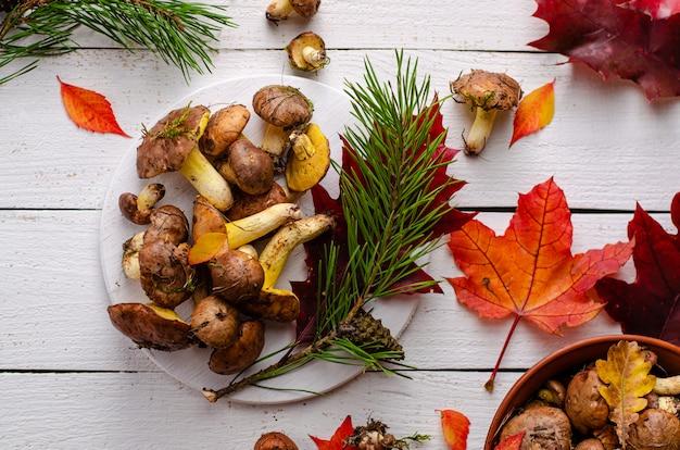 Frische rohe essbare ölige pilze und blätter