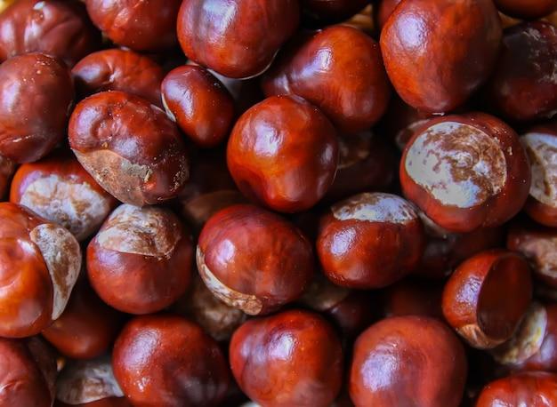 Frische rohe herbstkastanien hautnah. aesculus hippocastanum-pflanze.