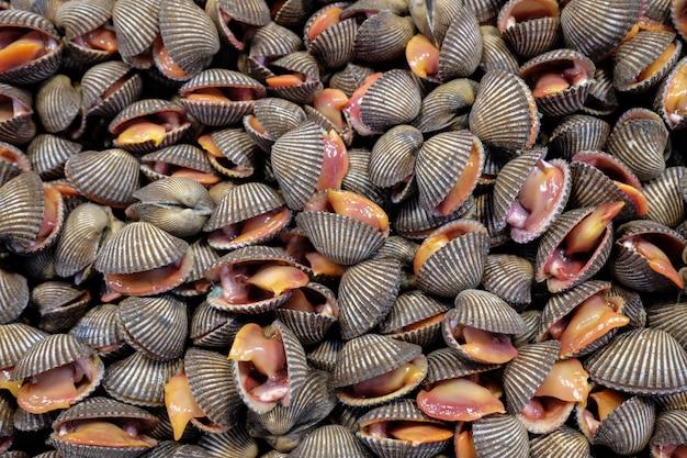 Frische rohe herzmuschelmeeresfrüchte