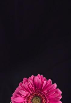 Frische rosa blüte mit gelber mitte