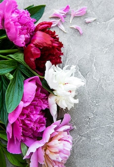 Frische rosa pfingstrosenblumengrenze mit kopienraum auf grauem betonhintergrund, flache lage.