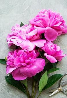 Frische rosa pfingstrosenblumengrenze mit kopienraum auf grauem betonhintergrund, flache lage