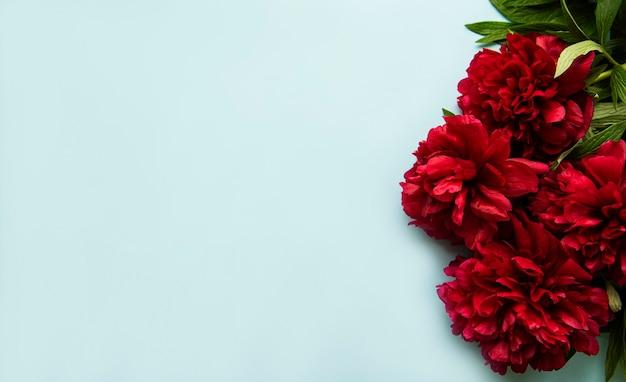 Frische rosa pfingstrosenblumengrenze mit kopienraum auf pastellblauem hintergrund, flache lage.