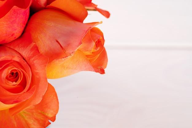 Frische rosen blühen. blumenhintergrund schließen oben