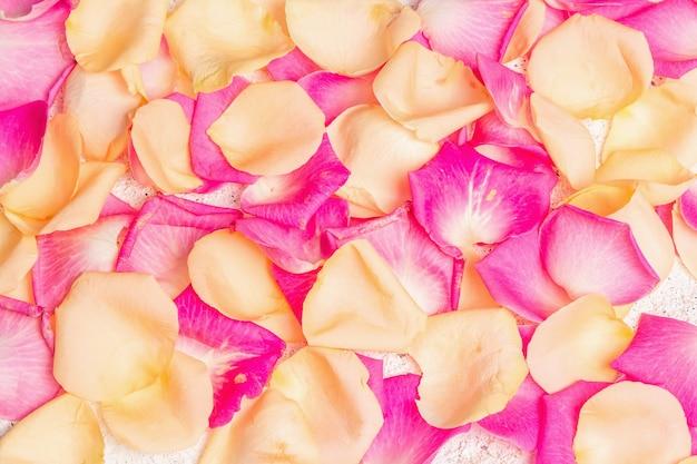 Frische rosenblätter auf gipshintergrund verstreut. mehrfarbige blumen, festliches oder romantisches konzept. beauty- oder spa-trend, sanfte farben