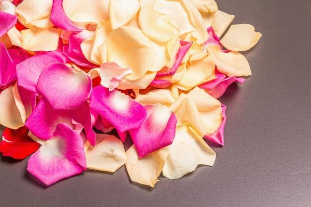 Frische rosenblätter verstreut auf schwarzem steinhintergrund. mehrfarbige blumen, festliches oder romantisches konzept. beauty- oder spa-trend, sanfte farben