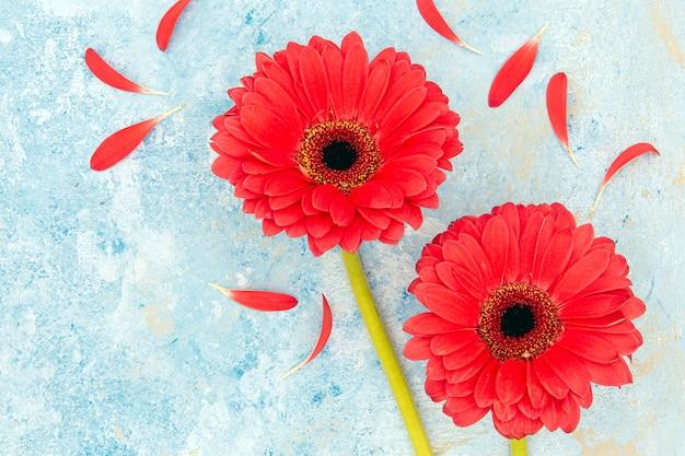 Frische rote frühlingsblumen und blütenblätter über blauem strukturiertem hintergrund
