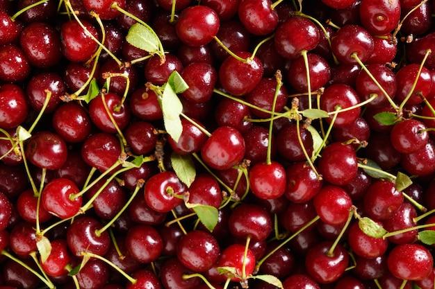 Frische rote kirsche als fruchtsommerhintergrund. ansicht von oben. nasse kirsche mit tropfen.