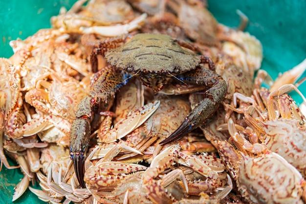 Frische rote krabbe im behälter. frische blaue schwimmkrabbe am meeresfrüchtemarkt