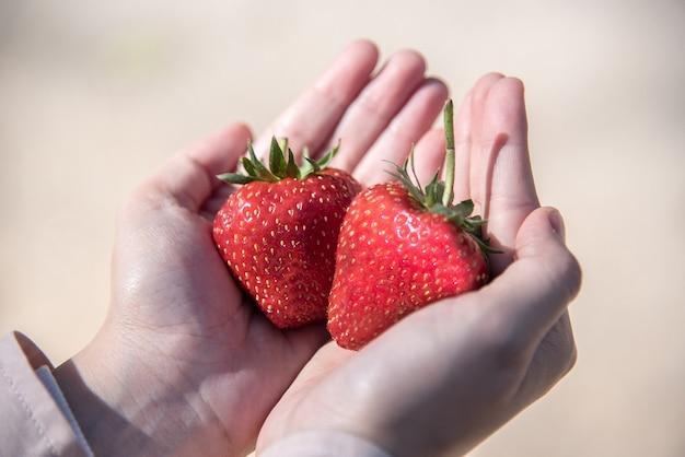 Frische rote reife erdbeerfrucht an hand
