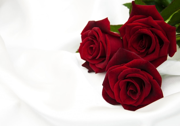 Frische rote rosen