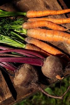 Frische rüben und karotten mit spitzen auf einem holztisch im garten an einem sonnigen tag. neue ernte von saisongemüse. vitamine und gesundheit aus der natur. nahaufnahme.
