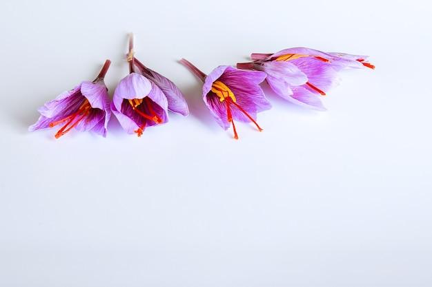 Frische safranblüte und getrocknete safranfäden