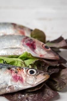 Frische sardinen roh