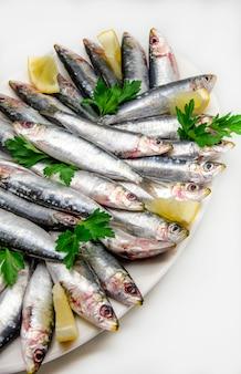 Frische sardinen