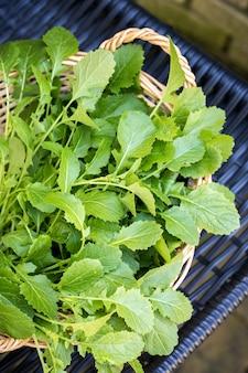 Frische scharfe senfblätter für den frühlingssalat im korb