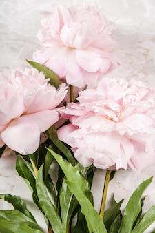 Frische schöne pfingstrosenblumen