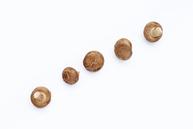 Frische shiitake-pilze auf weißer oberfläche