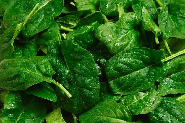 Frische spinatblätter als hintergrund.