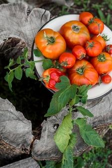 Frische tomaten mit hohem winkel auf baumstamm