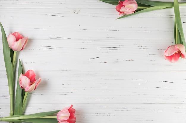 Frische tulpen an der ecke des weißen hölzernen strukturierten hintergrundes