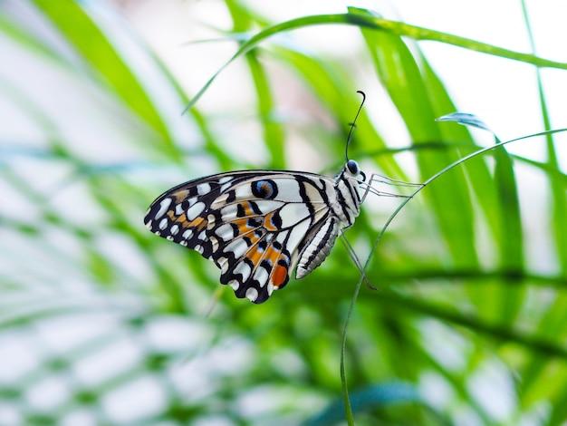 Frische umgebung mit schmetterlingen, die auf grünen blättern fliegen.