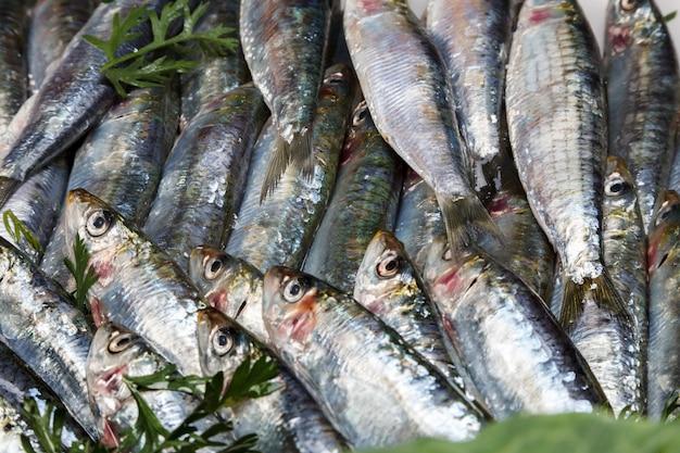 Frische und rohe sardinen