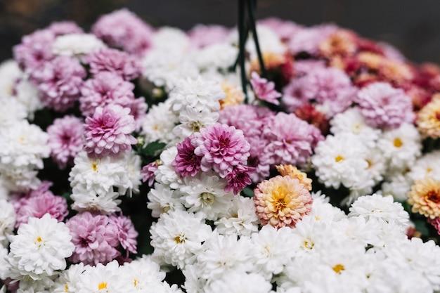 Frische verschiedene asterblumen in der blüte