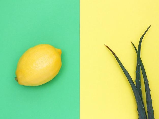 Frische zitrone und aloe auf gelbem und grünem hintergrund
