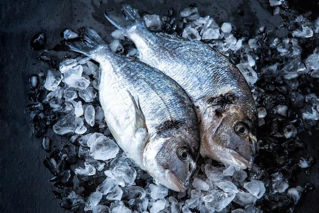 Frischer dorado-fisch in eisstücken auf dunklem hintergrund