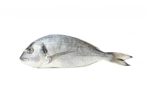 Frischer dorado-fisch lokalisiert auf weiß