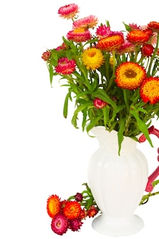 Frischer ewiger bunter blumenstrauß in der vase lokalisiert auf weißem hintergrund