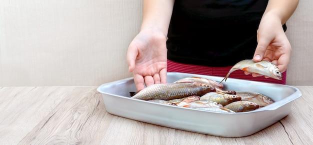 Frischer fang von flussfisch in einer schüssel auf dem tisch. hände halten rohen fisch.
