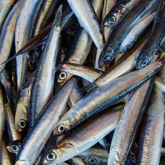 Frischer fisch der sardellen im fischmarkt
